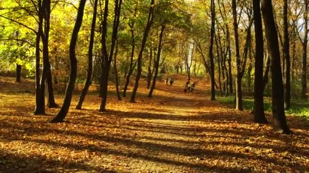 A pathway in a autumn park.