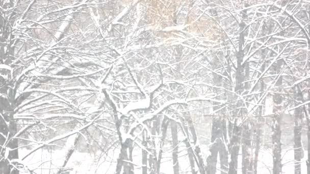 Zimní sněžení zblízka