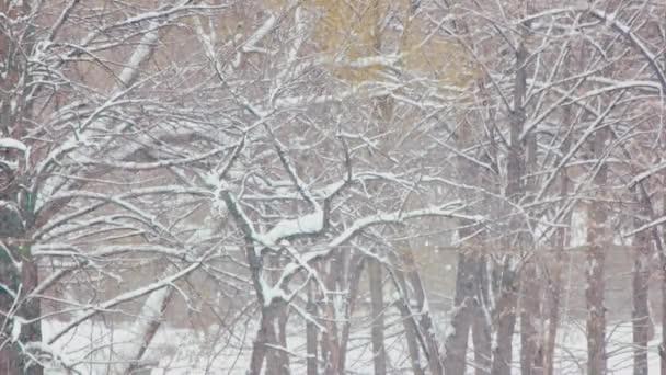 Téli hó varázslatos táj.