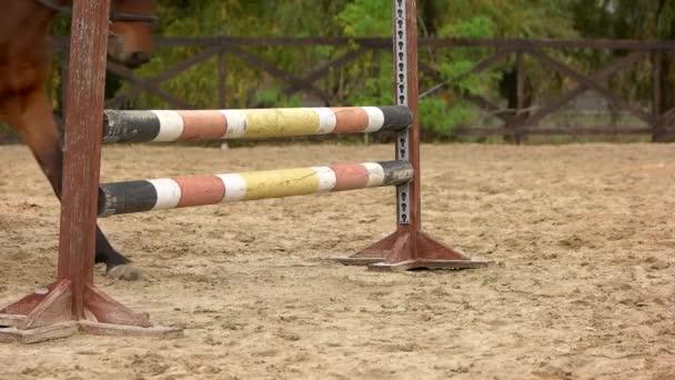 Zpomalený pohyb koně skákání přes překážky
