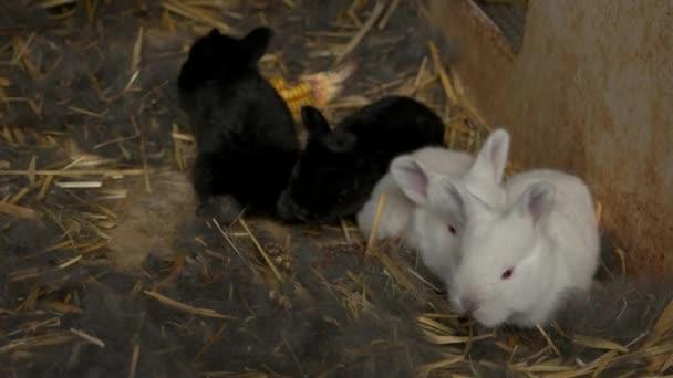 Čtyři roztomilé králíci v kleci