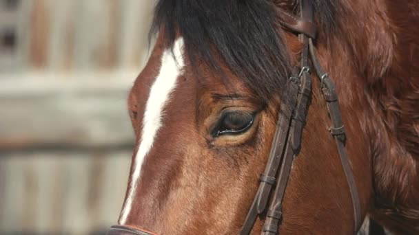 Uzavření krásného hnědého koně venku.
