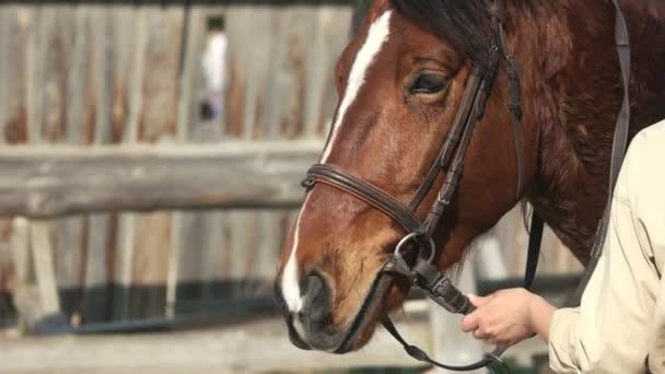 Beautiful brown horse close up.