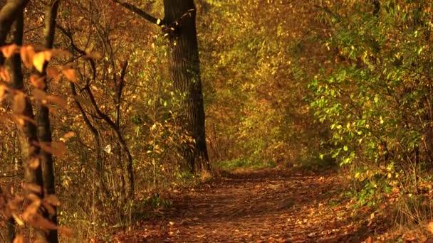 Podzimní krajina slunečného podzimní rezervace.