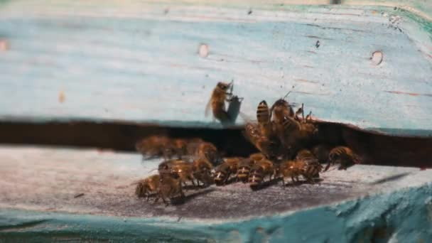 Raj méhek repülnek a kaptár közelről.