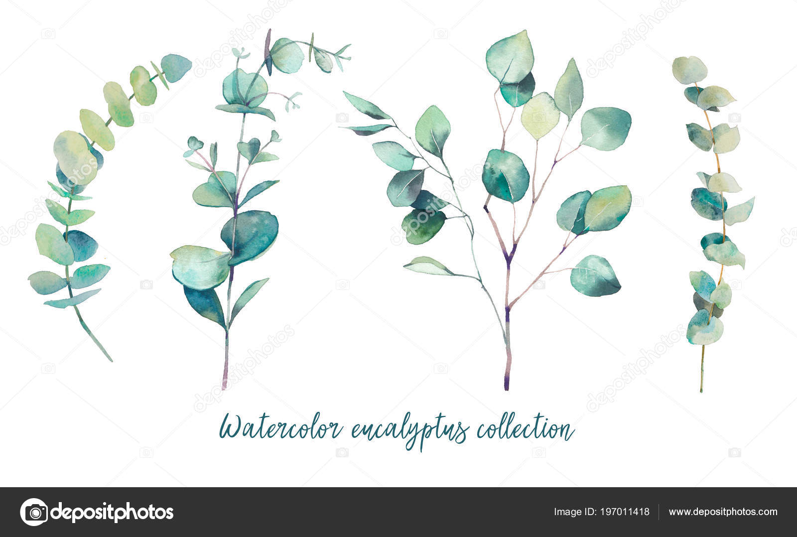 aquarell eukalyptus zweige mit runden bl ttern handgemalte. Black Bedroom Furniture Sets. Home Design Ideas