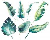 Akvarel, tropické listy: monstera, Gumárna, banán dlaň. Botanická ilustrace exotických rostlin. Izolované objekty na bílém pozadí