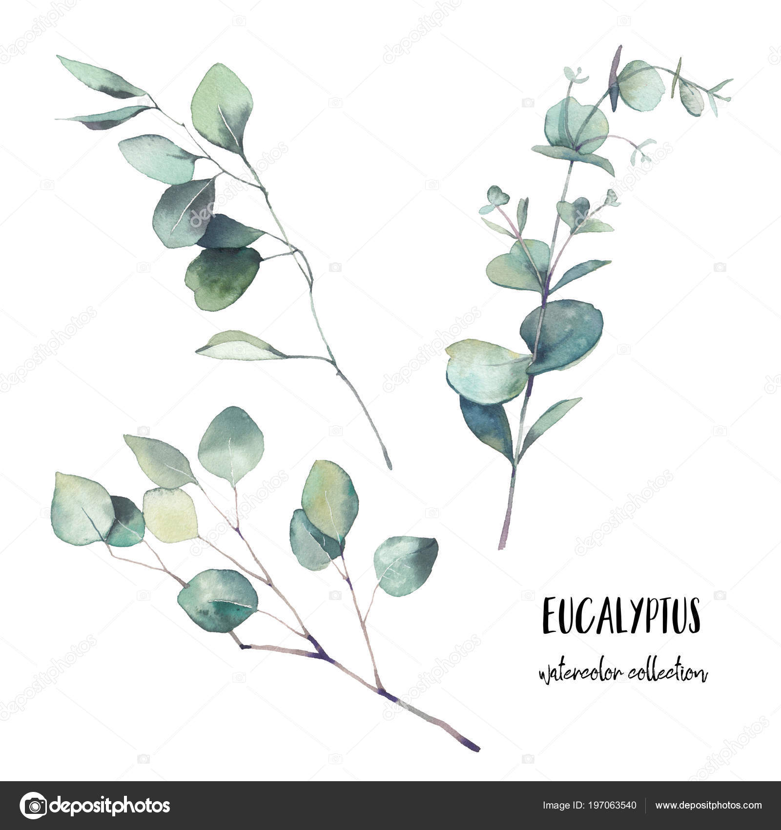 Watercolor eucalyptus branches with round leaves set. Hand painted floral  clip art objects isolated on white background. 32