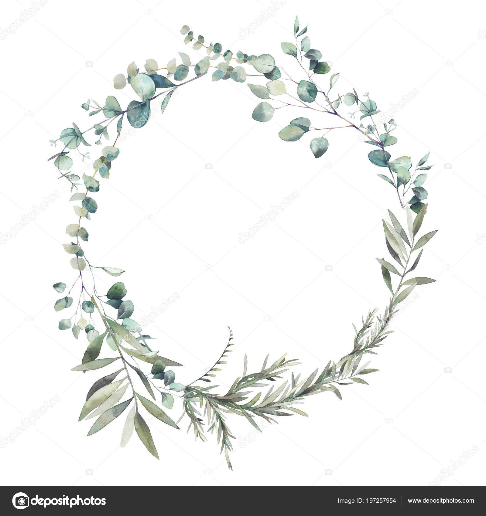 Watercolor Greenery Combination Eucalyptus Branches And Olive Tree Leaves Wreath Hand Painted Floral Clip Art Round Frame Isolated On White Background