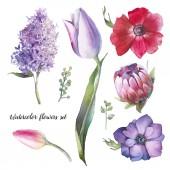 Kézzel festett virágos elemek készlet. Akvarell botanikai illusztrációja tulipán, protea, ánizs, lila virágok és levelek. Természetes tárgyak elszigetelt fehér háttér