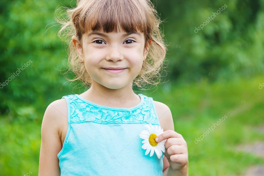 the girl is holding chamomile flowers in her hands. Selective focus. nature.