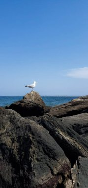 Seagull sitting on rocks by ocean