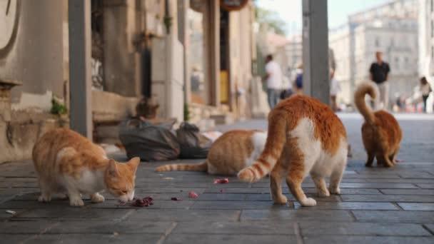 Gatti Randagi Mangiare Carne A Istanbul Street Turchia 4k Video