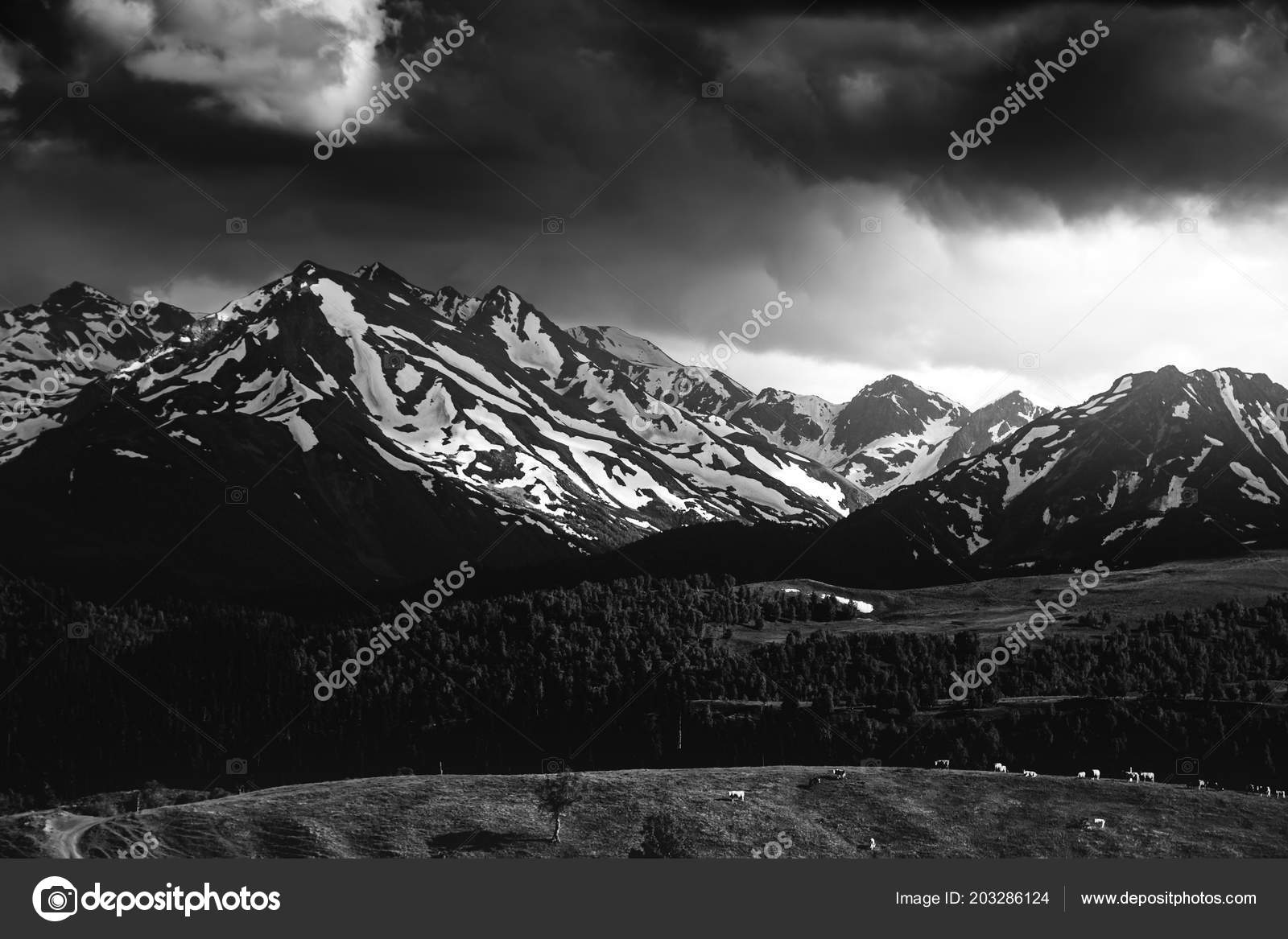 Beautiful Nature Landscape Mountains Snow Green Forest Black White