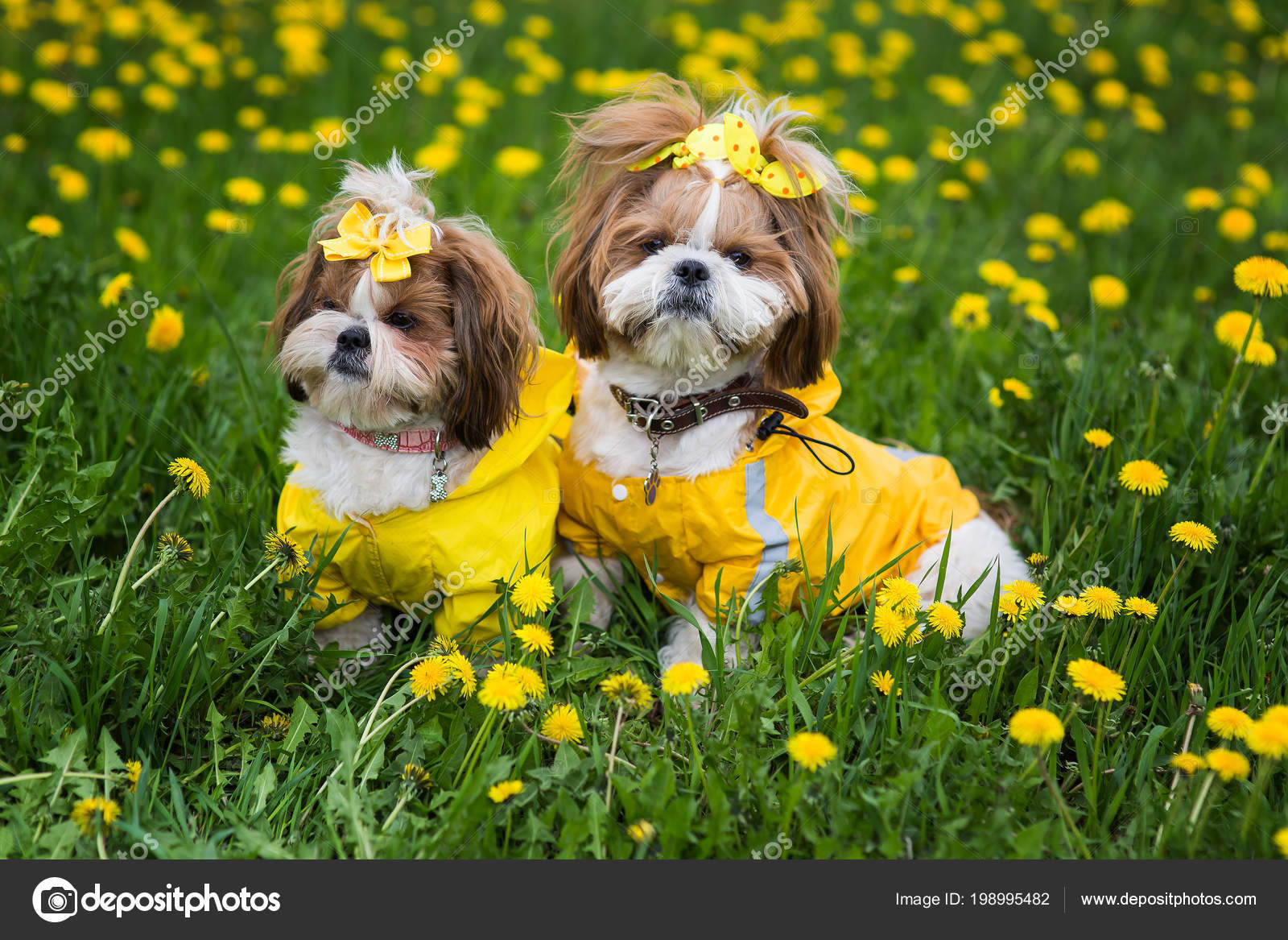 Cute Little Dog Sitting Yellow Flowers Yellow Overalls Bows Green