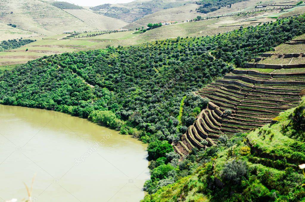 grape vineyards hills