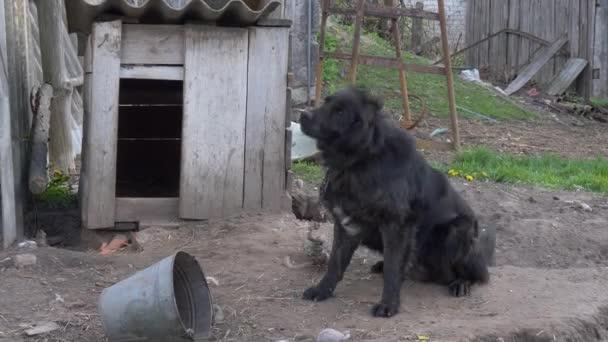 nagy fekete udvari kutya lánc