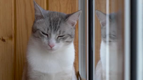 gyönyörű orosz európai macska ül az ablakpárkányon