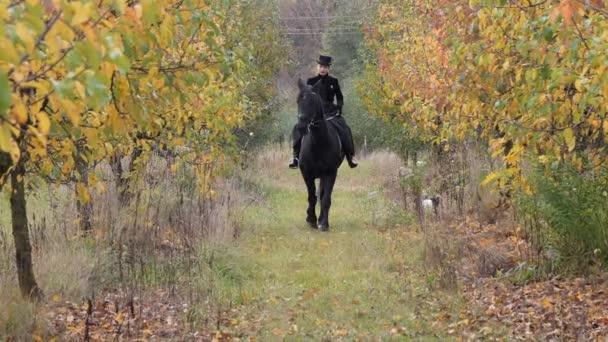 dívka v černých šatech s černým koněm close-up