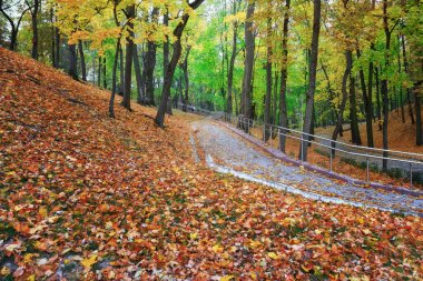 Autumn landscape in a city park. Gomel, Belarus 2020