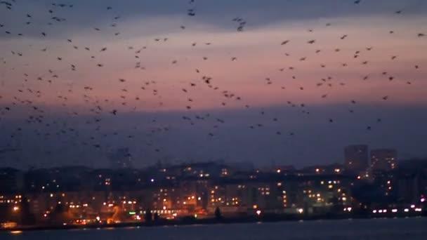Madarak örvény a éjszaka tóra, szemben a város éjszakai fények