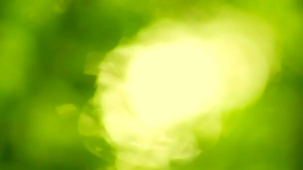 Gyönyörű fuzzy transzfúziós a fényt a fák levelei. természetes elmosódott háttér, a természet absztrakt háttér, a természet zöld bokeh