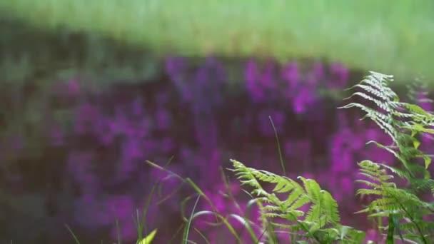 Růžové fialové květy odráží ve vodě
