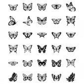 Fotografie Satz von Schmetterling-Vektor-Symbolen