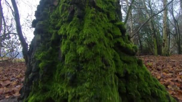 Zelené lesní stromy, strom lesy, stromy silueta, přírodní pozadí