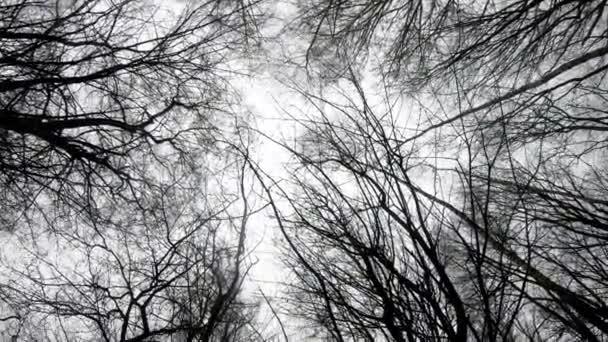 Zöld erdei fák, erdők fa, a fák sziluettje természet háttér