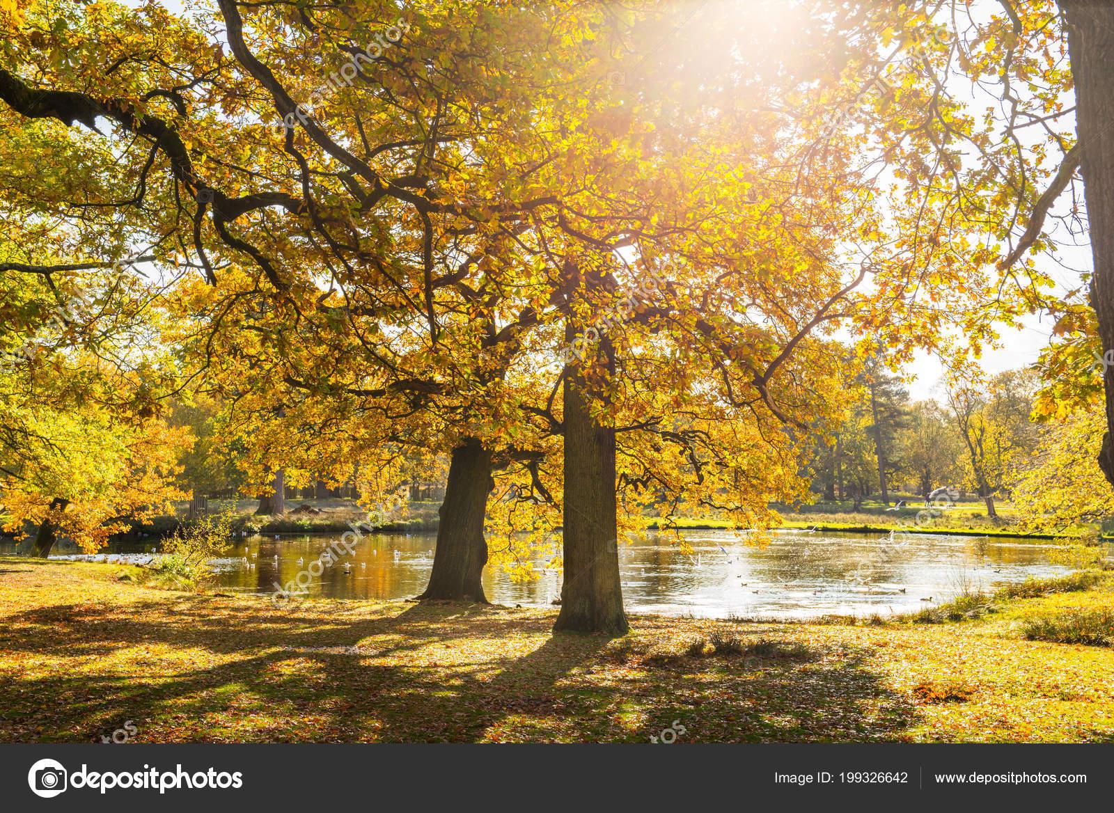 Paisaje Otoño árboles Otoño Coloridos Con Hojas Amarillas Cerca Del