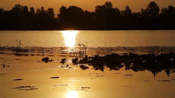 kachny na východ slunce na jezero, východ slunce nad řekou, motorový člun na východ, ranní krajinu, východ slunce na řece s lekníny, východ slunce nad jezerem