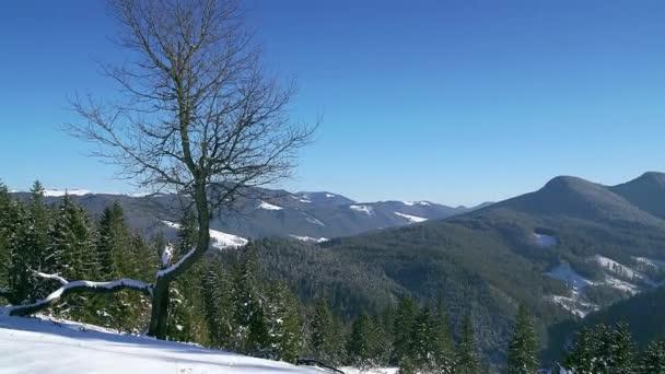 Baum im Winter Mountain Standard Timelapse, einsame Baum in den schneebedeckten Bergen, 4 k Winter Zeitraffer in Nowotarski Berge, Bäume Schatten bewegen über Schnee im Winter Mountain Zeitraffer