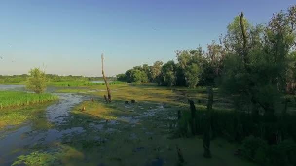 osamělý strom suchý v zarostlý rybník, 4 k letecký pohled suché větve v zarostlý rybník, zarostlá krajina bažina vody stromy keře, mrtvý strom v jezeře v létě, letecký pohled na zarostlý rybník 4k, létání nad řekou zelené stromy