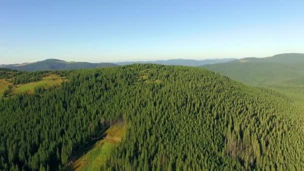A légi felvétel a erdős hegyek, csodálatos járat a gyönyörű erdőben, a hegyekben, a légi felvétel a fenyő erdő, hegyek táj, repül a hegyek és dombok, erdei
