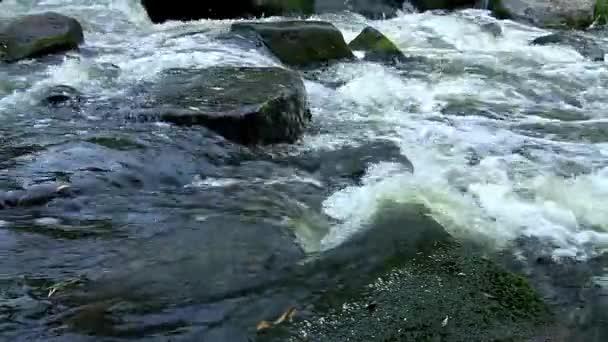 Lesní řeka, klidný potůček v lese, potok v lese