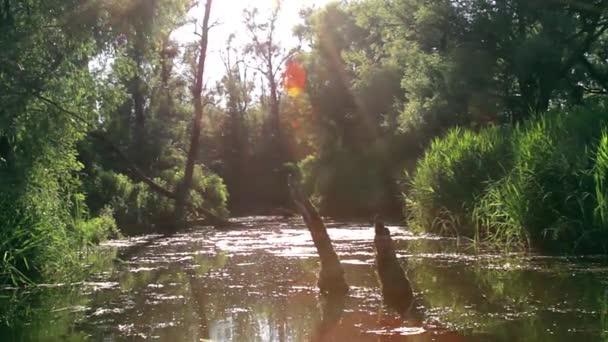rybník v dopoledních hodinách, zarostlé lesní rybník, Enchanted forest s řeky, stromy a rybník klidné vody jezera
