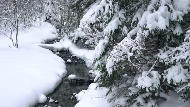 zasněžené stromy nad stream, Young vánoční stromy poblíž lesní potok, lesní potok v zimě