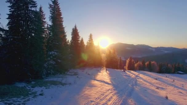 Flight over coniferous trees at dawn in the winter mountains, aerial view of Dawn in the winter mountains, Sunrise in winter Carpathian mountains, aerial view of snow winter trees at sunrise,