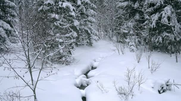 Lesní potok v zimě, zasněžené stromy nad potokem, Young vánoční stromy lesa Creek a okolí.