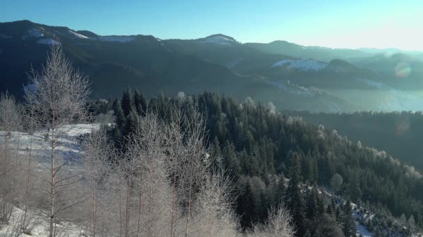 Cristalli di gelo e neve di mattina, mattina gelo sugli alberi, alberi con fiocchi di neve di cristallo scintillanti