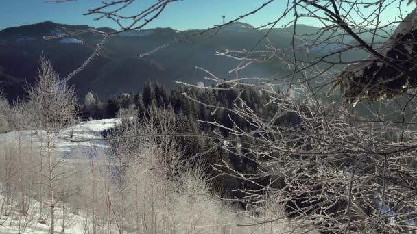 Cristalli di gelo e neve di mattina, mattina gelo sugli alberi, alberi con fiocchi di neve di cristallo scintillanti,