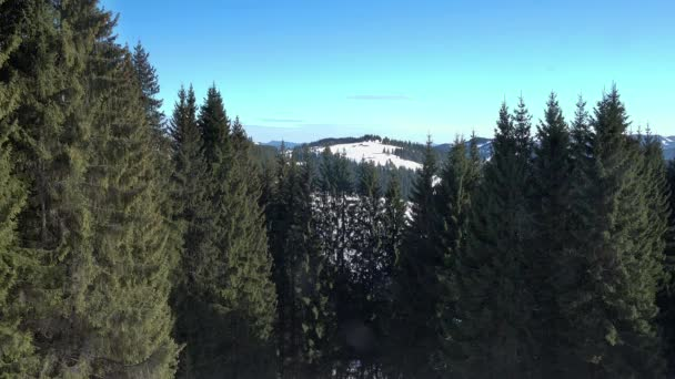 Coniferous winter forest view from above, Dense coniferous forest top, view aerial a winter pine forest of pines and firs,