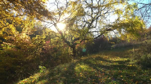 autumn tree in the sun, lonely autumn tree in the sunbeam, Autumn Park at the sunny day