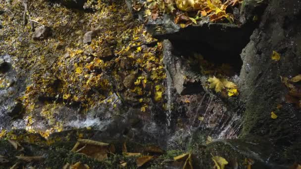 Autumn foliage in the creek , waterfall and autumn foliage, brook in autumn colors, Autumn stream close-up