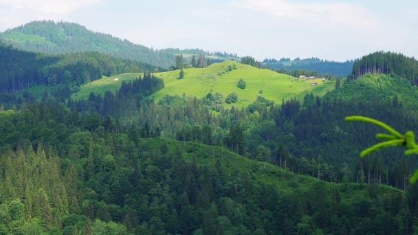 hora letní krajina, borovicové lesy les a horské údolí, zelená příroda krajina hory,