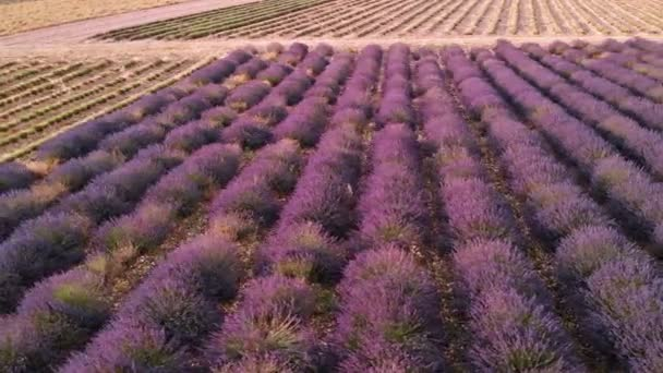 Drone view over Valensole Provence, France