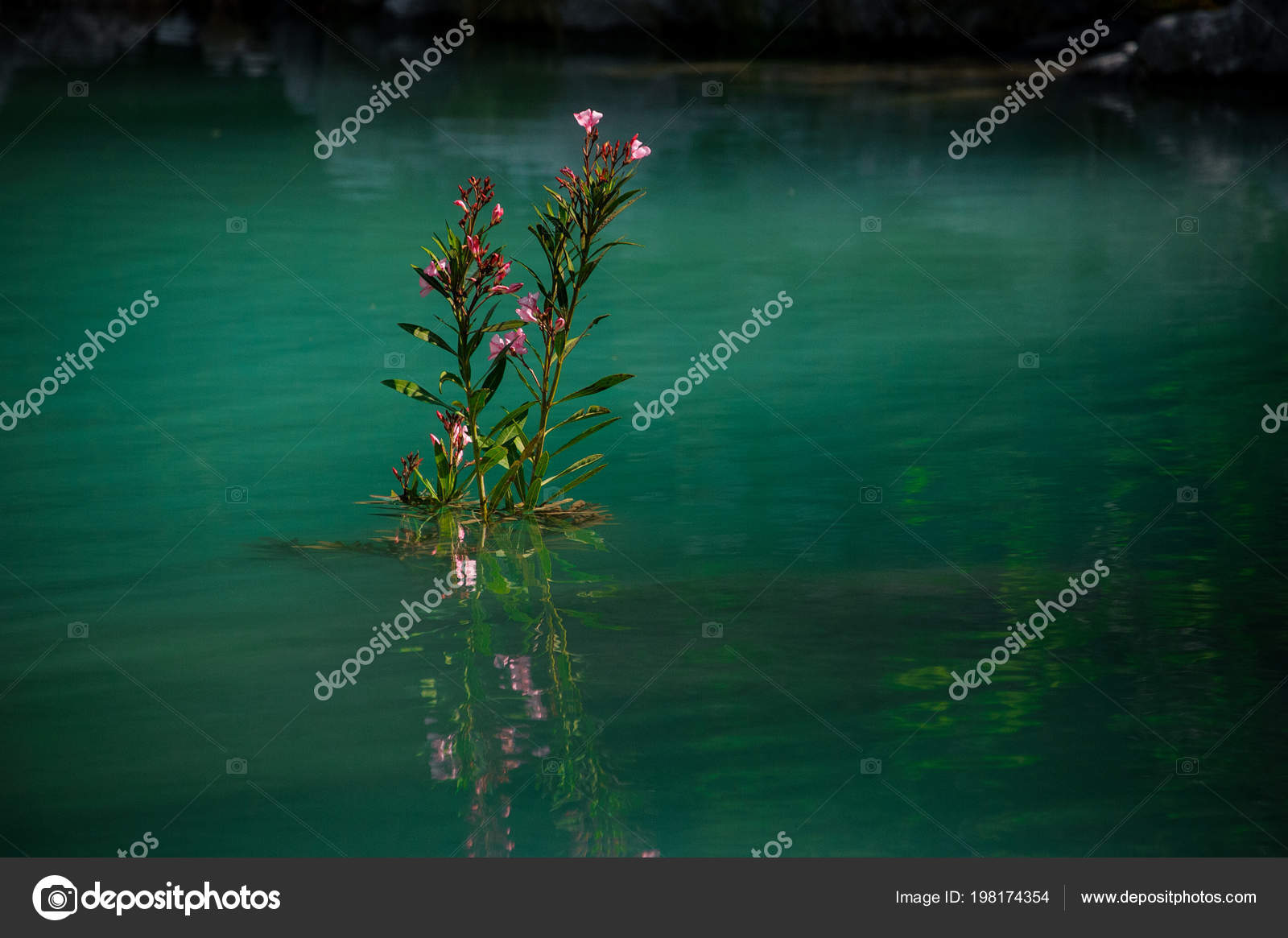 Beautiful water flowers in a beautiful pond stock photo fesenko amazingly beautiful water flowers in the wonderful pond with the clear blue water on the blurred background photo by fesenko izmirmasajfo