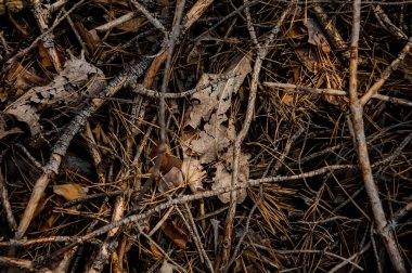 Textured background of the fall forest floor of pine needles, branches and dry leaves. Beginning of autumn