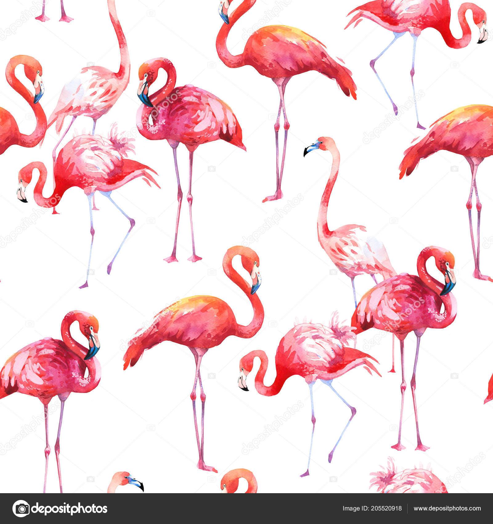 Aquarela sem costura padrão no fundo branco. Ilustração com flamingo ...